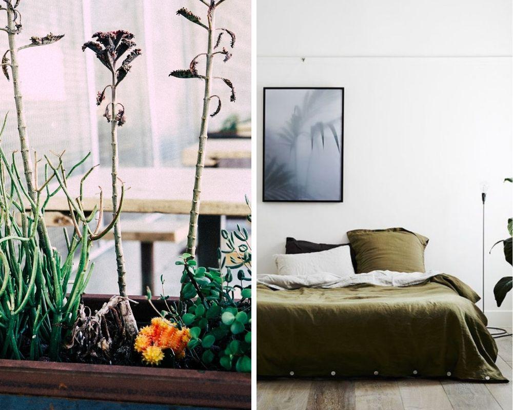 Plants and polished concrete
